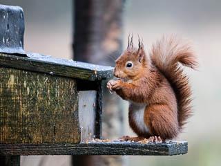 Squirrel Feeding