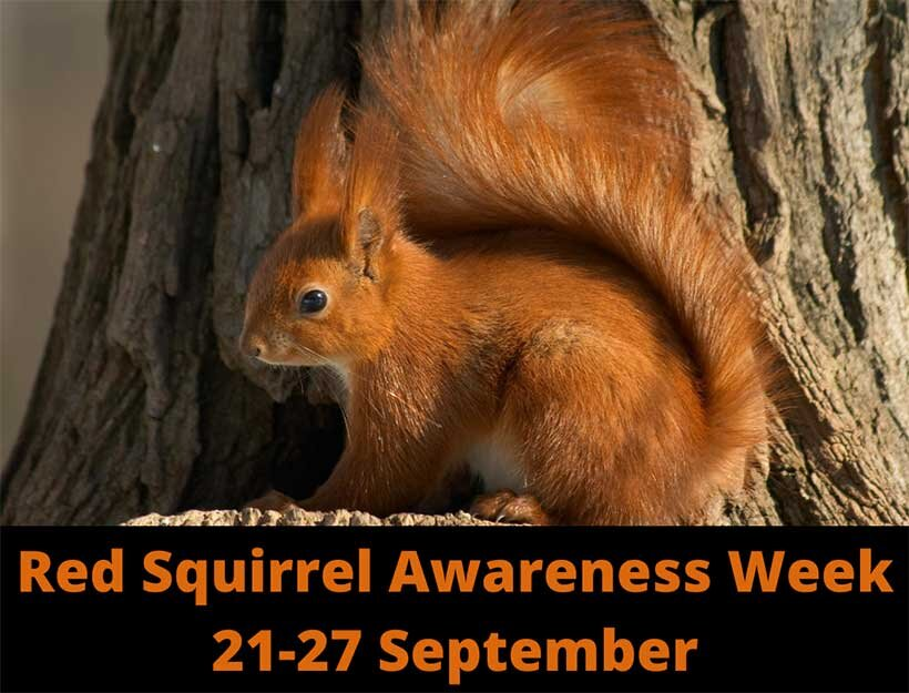 National Red Squirrel Awareness Week 21.9.20 – Press Release